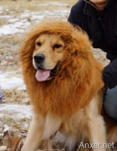 disfraz-perro-leon